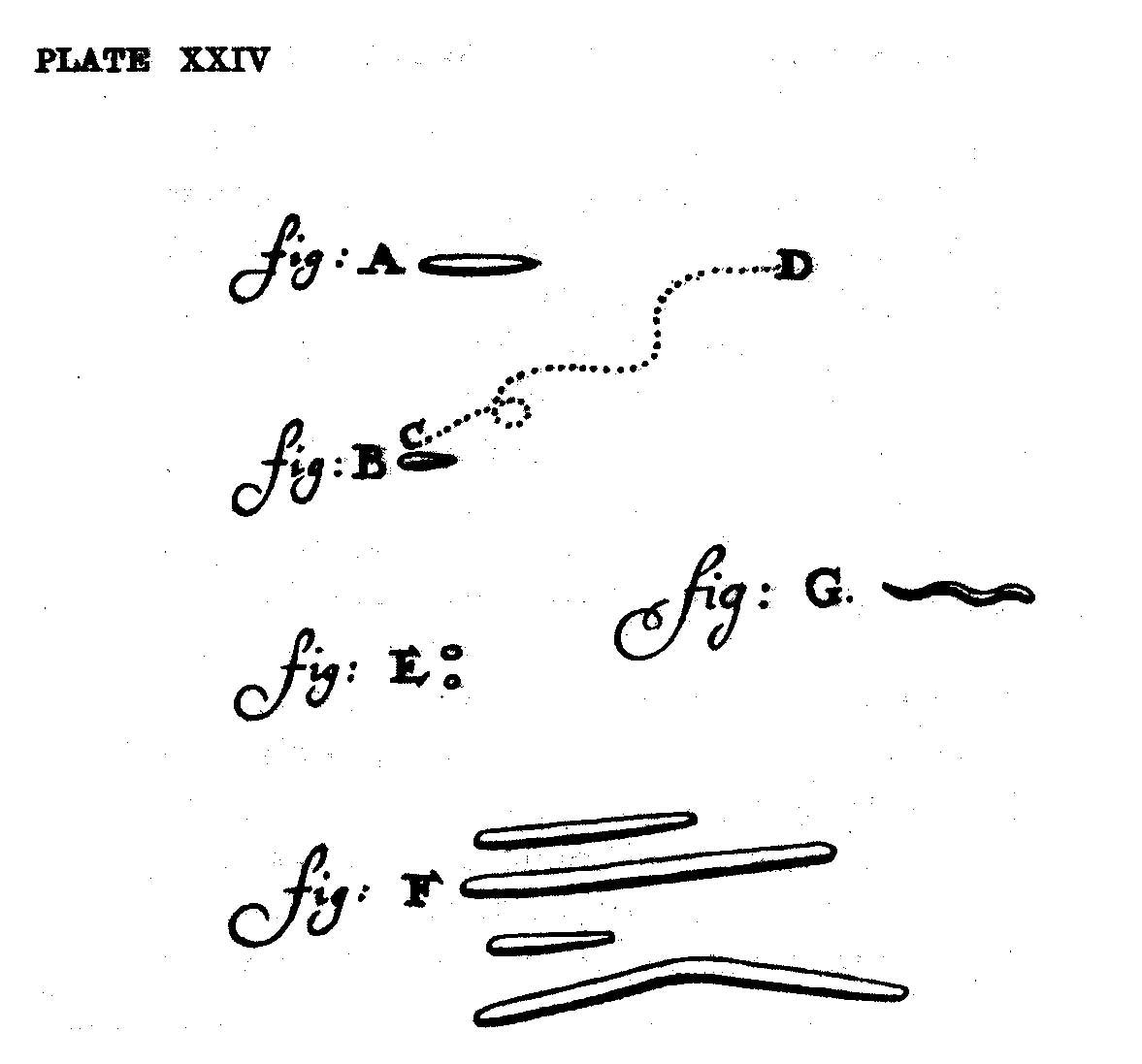 van Leeuwenhoeks teckningar av 'små djur' (animalcules).