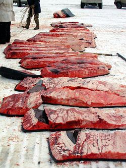 Meat from a Bowhead Whale, hunted and eaten by Inupiaq, Eskimos, in Barrow, Alaska. It is legal in Alaska for Inupiaq to harvest some whale.