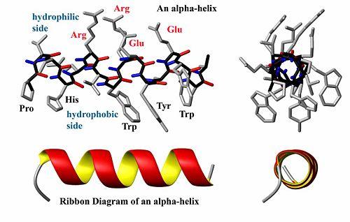 Protein    structure     encyclopedia article  Citizendium