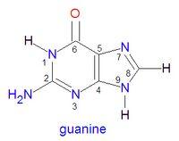 Guanine encyclopedia article citizendium