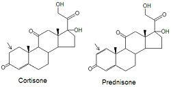 cortisol prednisone conversion