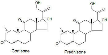 what is the difference between prednisone and steroids