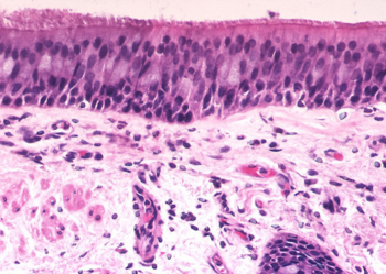 Histology Encyclopedia Article Citizendium