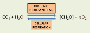 photosythesis articles » articles » the power of photosynthesis the power of photosynthesis by: photosynthesis is one of the great inventions of nature that we are trying first to.