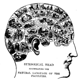 The History of Phrenology