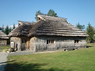 A cise is a traditional Ainu dwelling, with a thatched roof and entranceway separate from the main interior space. These replicas can be seen at Nibutani, an Ainu-majority village in Hokkaido.